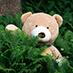 Giant teddy bear in jungle - TeddyWay